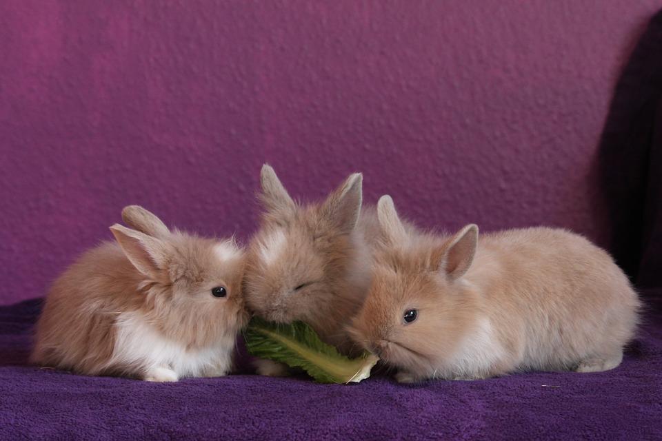 Rabbit 426131 960 720