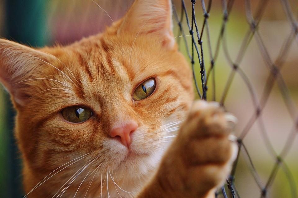 Cat 1044750 960 720