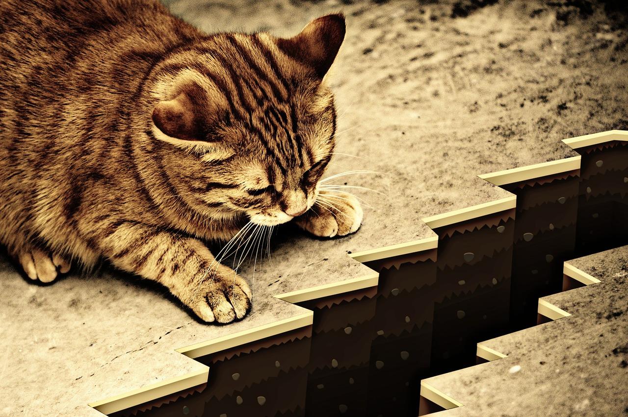 Cat 1055602 1280