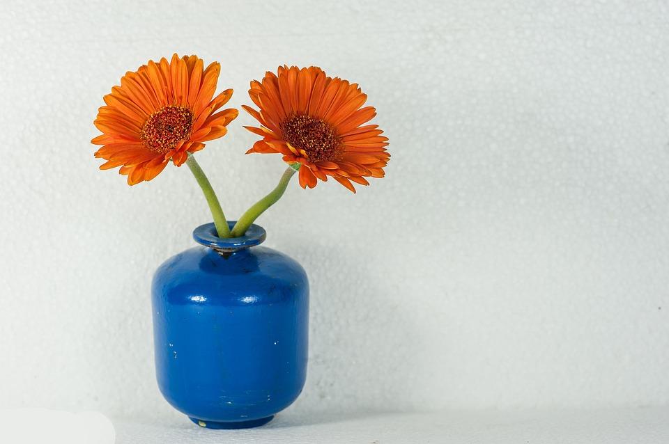 Flower 1275641 960 720