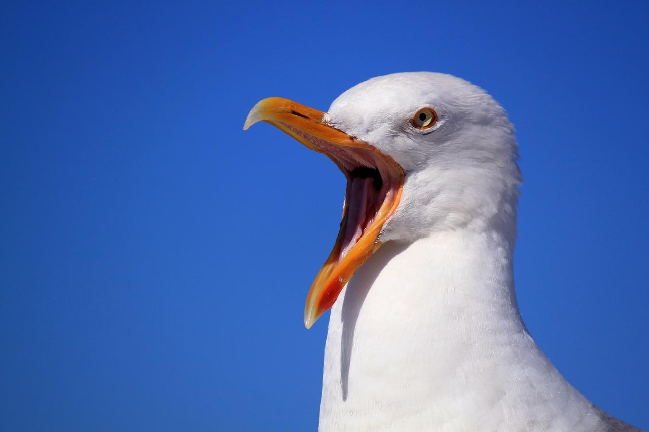 Seagull 249638 1280