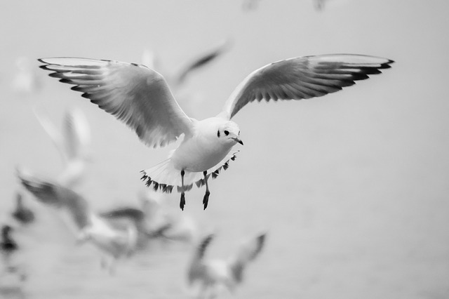 Seagull 271103 640